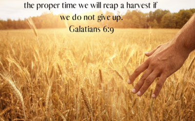 A Harvest is Coming