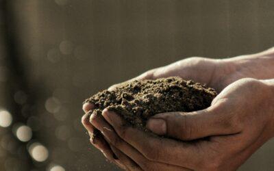 Prepare Your Soil